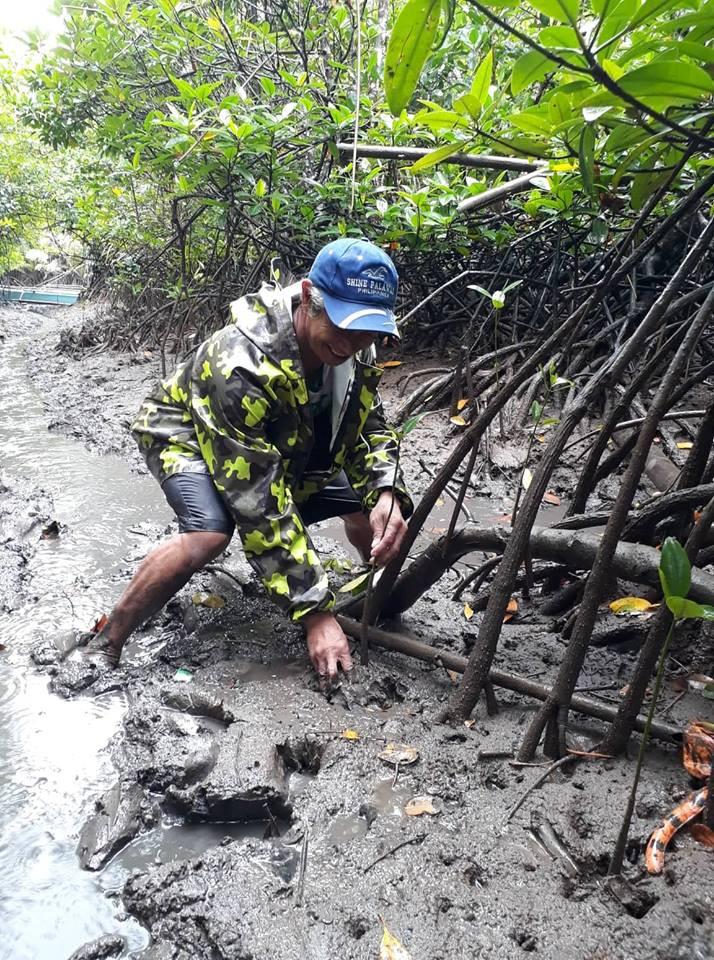 Mangrove Tree Planting 14.jpg