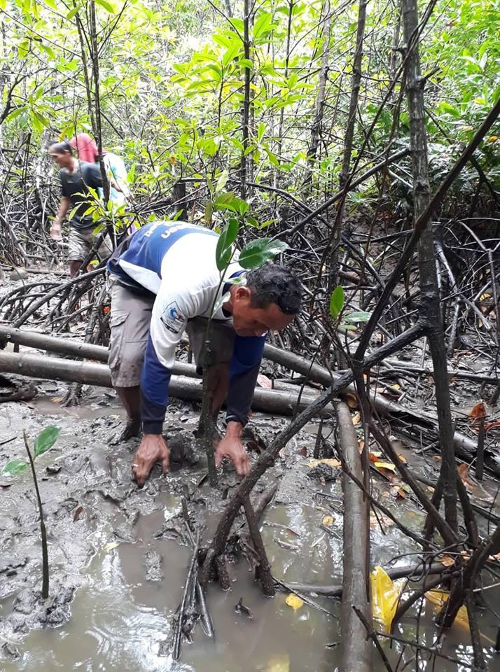 Mangrove Tree Planting 12.jpg