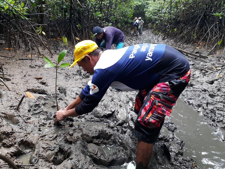 Mangrove Tree Planting 18.jpg