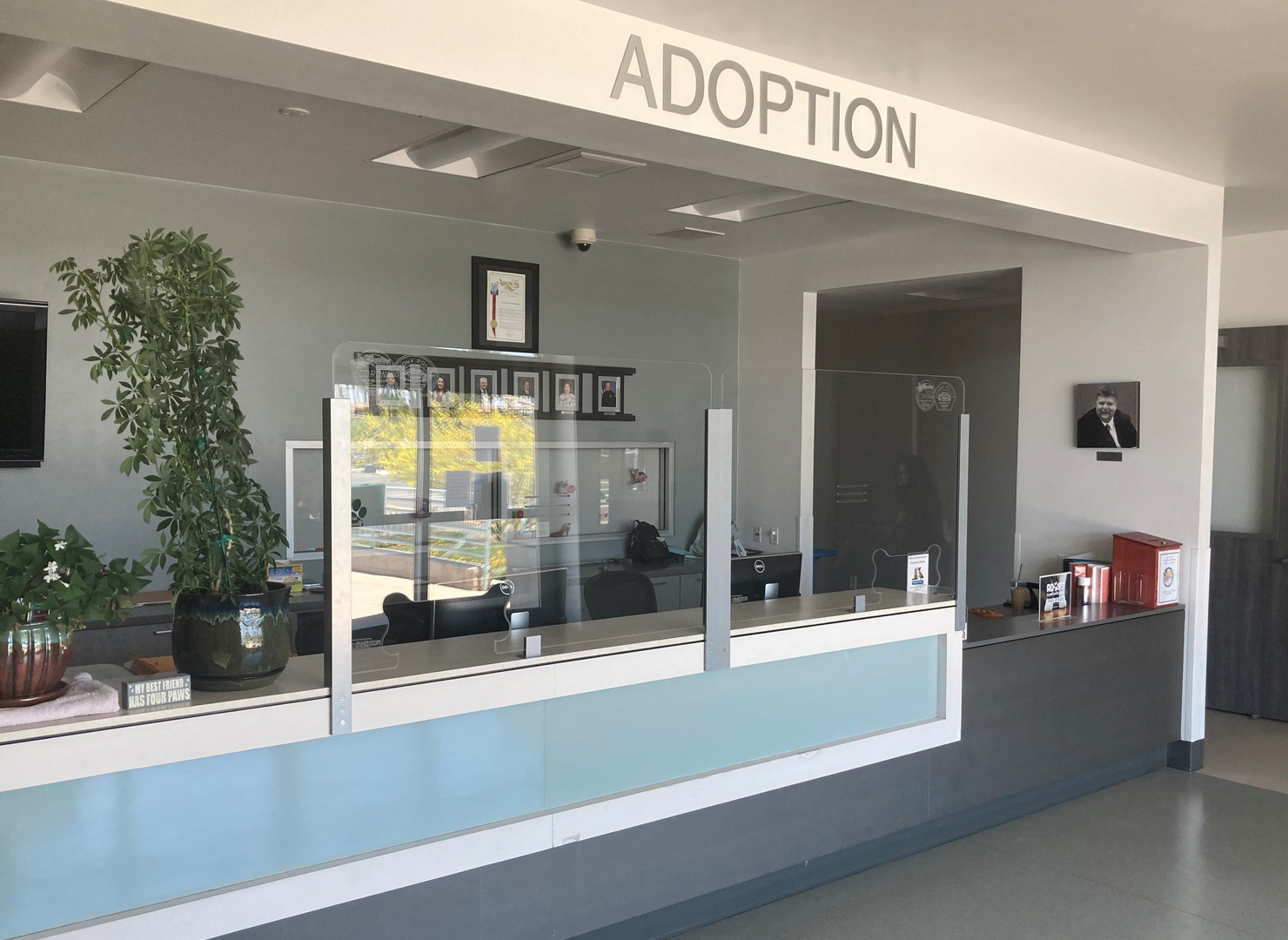Adoption Counter.jpg