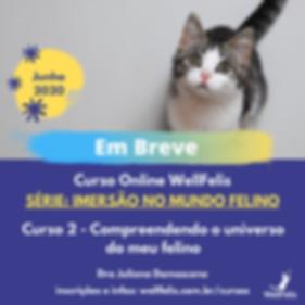 Feed Série_ Imersão no Mundo Felino (1).