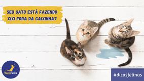 Seu gato está fazendo xixi fora da caixinha?