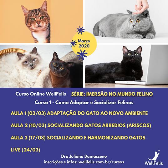 Feed_Série__Imersão_no_Mundo_Felino.png