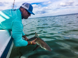 Shark Catch and Release