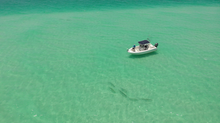 Fishing Cheat Sheet: Anna Maria Island