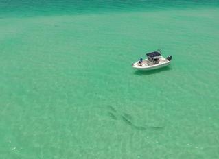 Fishing Cheat Sheet: Anna Maria Island