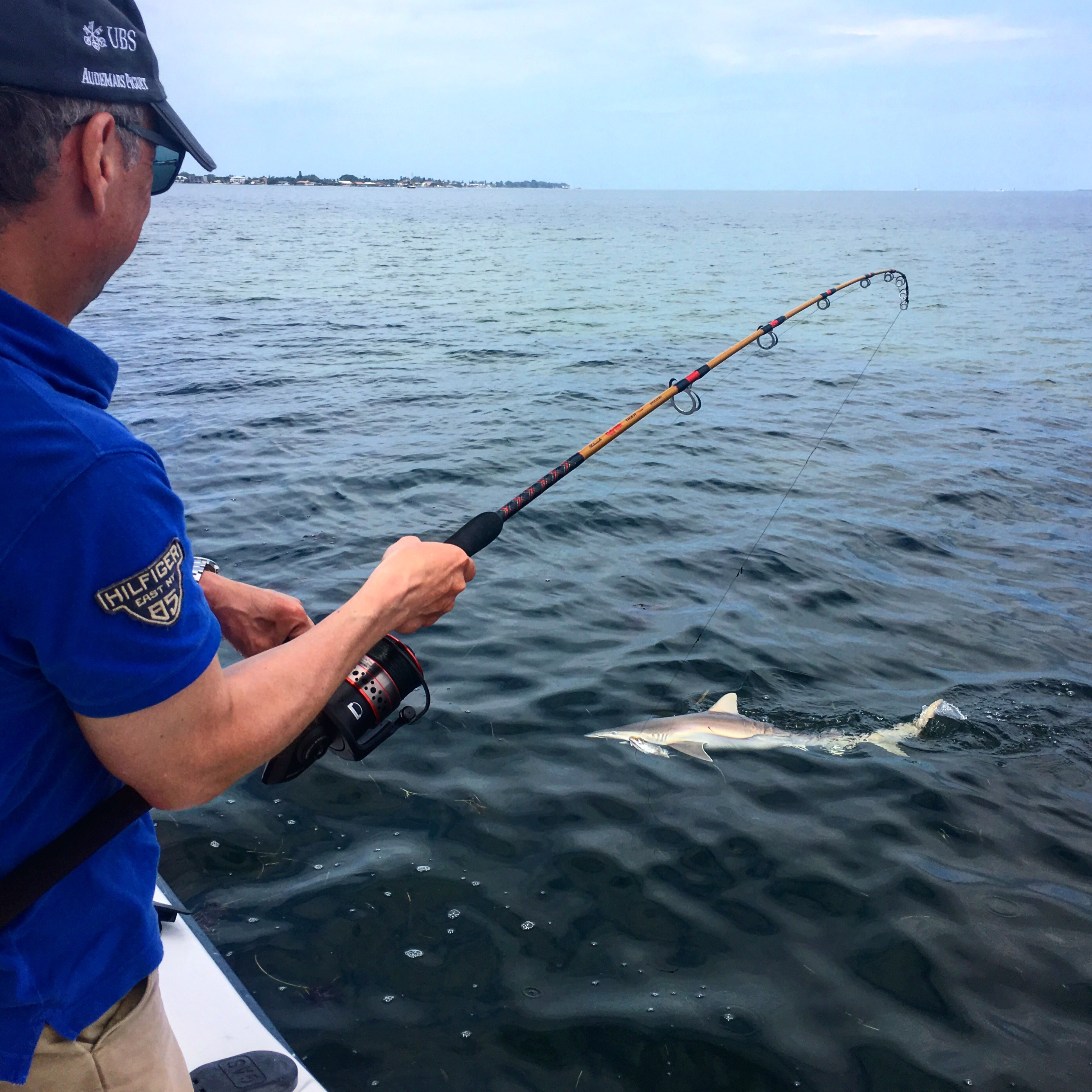 Anna Maria Island Shark