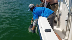 AMI Charters Catch and Release
