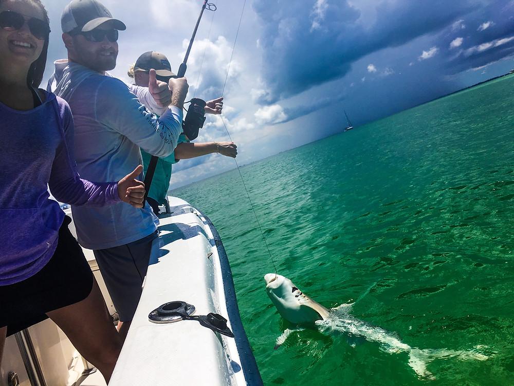 Shark Fishing Anna Maria Island