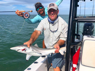 Anna Maria Island Fishing Report: November 2020