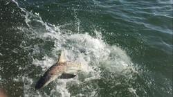 Anna Maria Island Shark Fishing