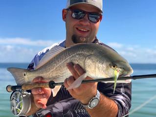 Anna Maria Island November Fishing Report 2018