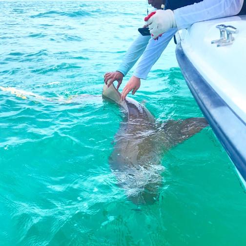 16-7-18-5747Anna Maria Island Fishin