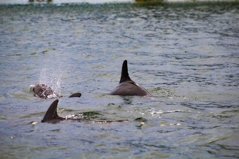 Anna Maria Island Dolphin Tours