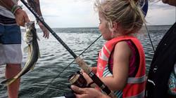 Anna Maria Island Snook Fishing