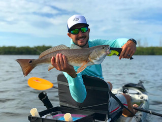 Anna Maria Island Kayak Fishing Report: November 2020