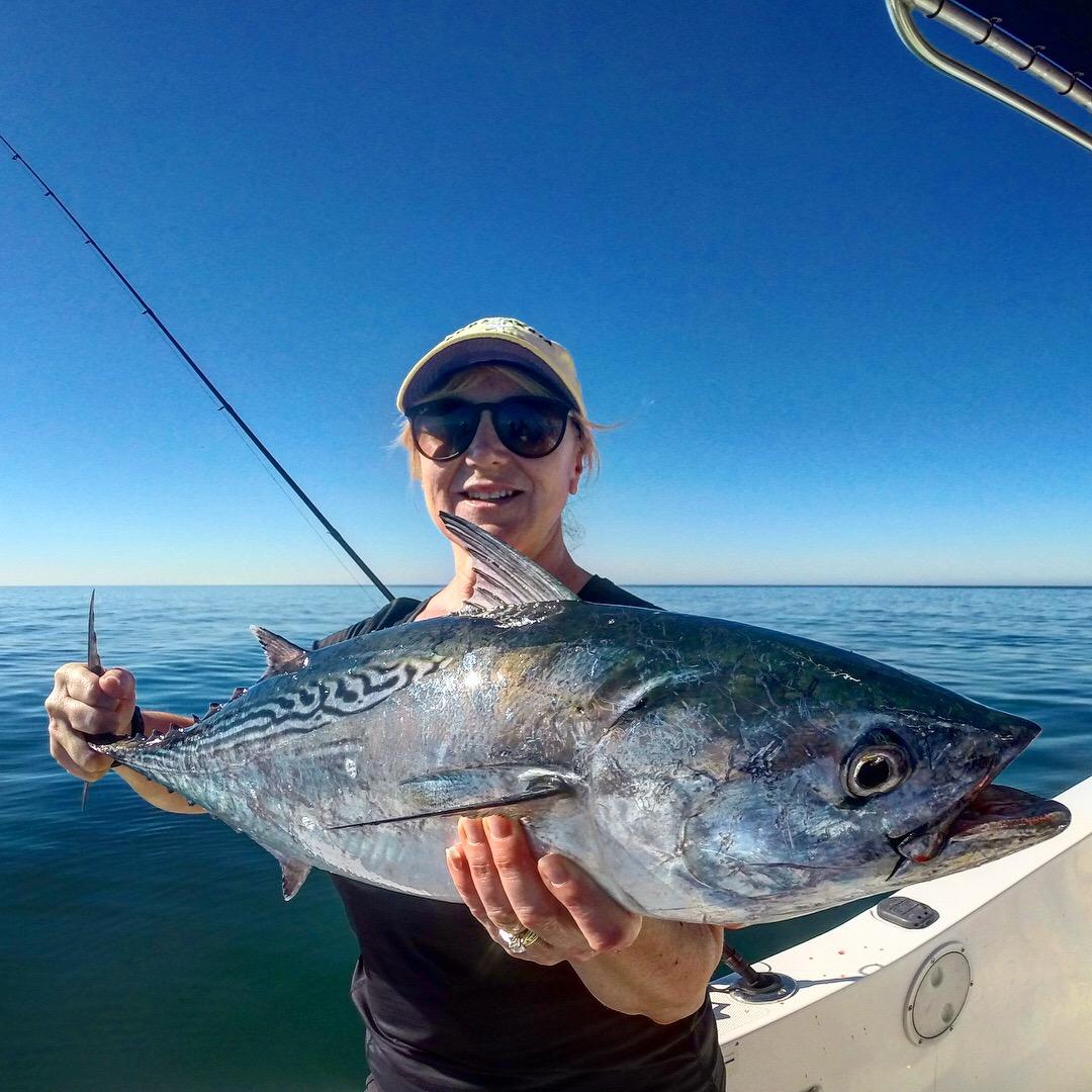 AMI Charters Bonito fishing