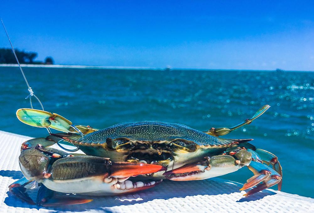 Anna Maria Island Fishing | AMI Charters