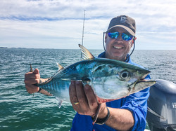 Bonito fishing Anna Maria Island