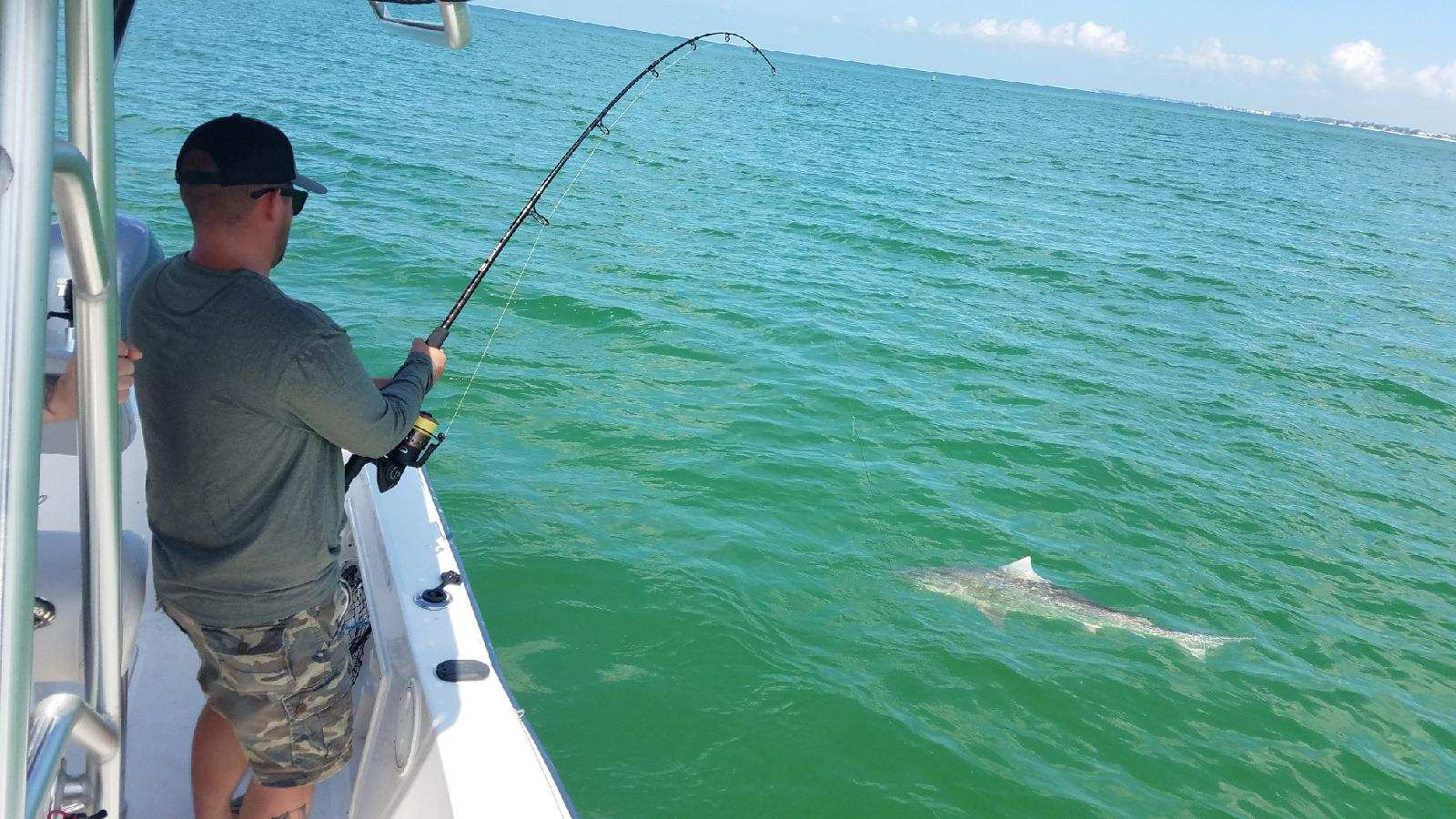 Anna Maria Island Shark Fishing Trip