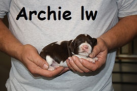 Haven Archie lw male 2.JPG