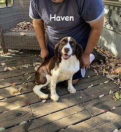 Haven 1.jpg