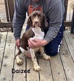 Daizee 2020.jpg