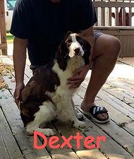 Dexter 2_edited.jpg