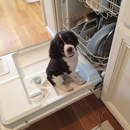 dishwasher molly.jpg