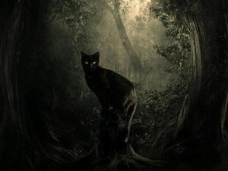Il Gatto Nero: famiglio e compagno delle streghe.