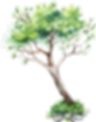 nature tree 1.png