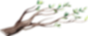 nature branch 4.png