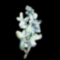 bouquet 4.png
