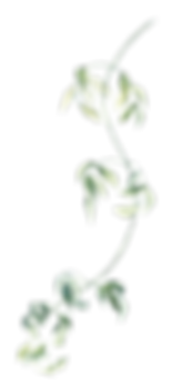 green element 17.png