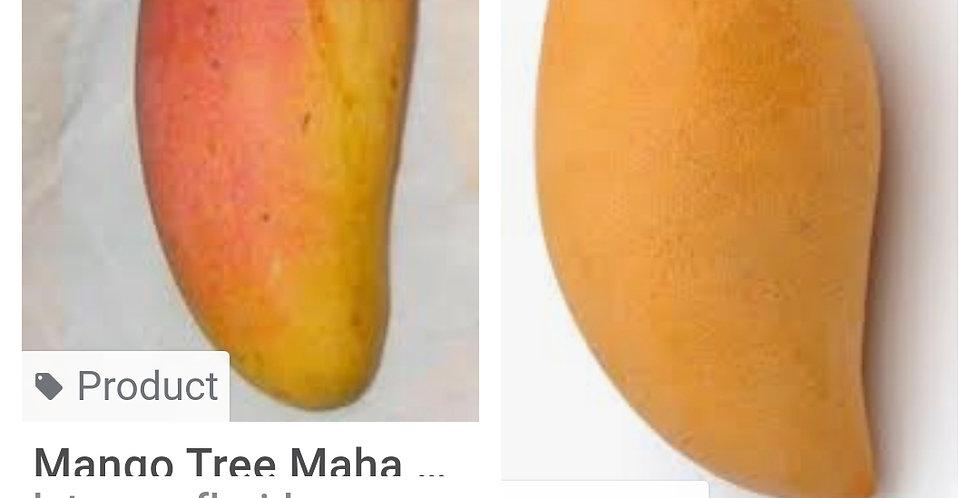 Mahachan