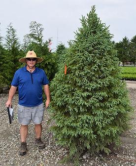 Spruce, White 8 foot.JPG