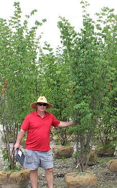 Redbud, Eastern 8-10 foot clump.JPG