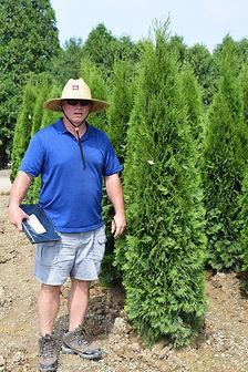 Arborvitae, Emerald Green 6-6.5 foot.JPG