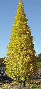 pr.sentry.tree__65126.1483986607.400.100