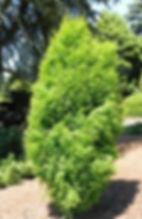 cypress 2_edited.jpg