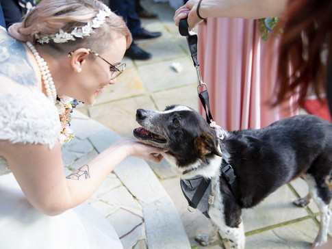 What do I need to Consider Before Including my Pet in the Wedding