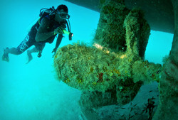 Go diving with the professionals
