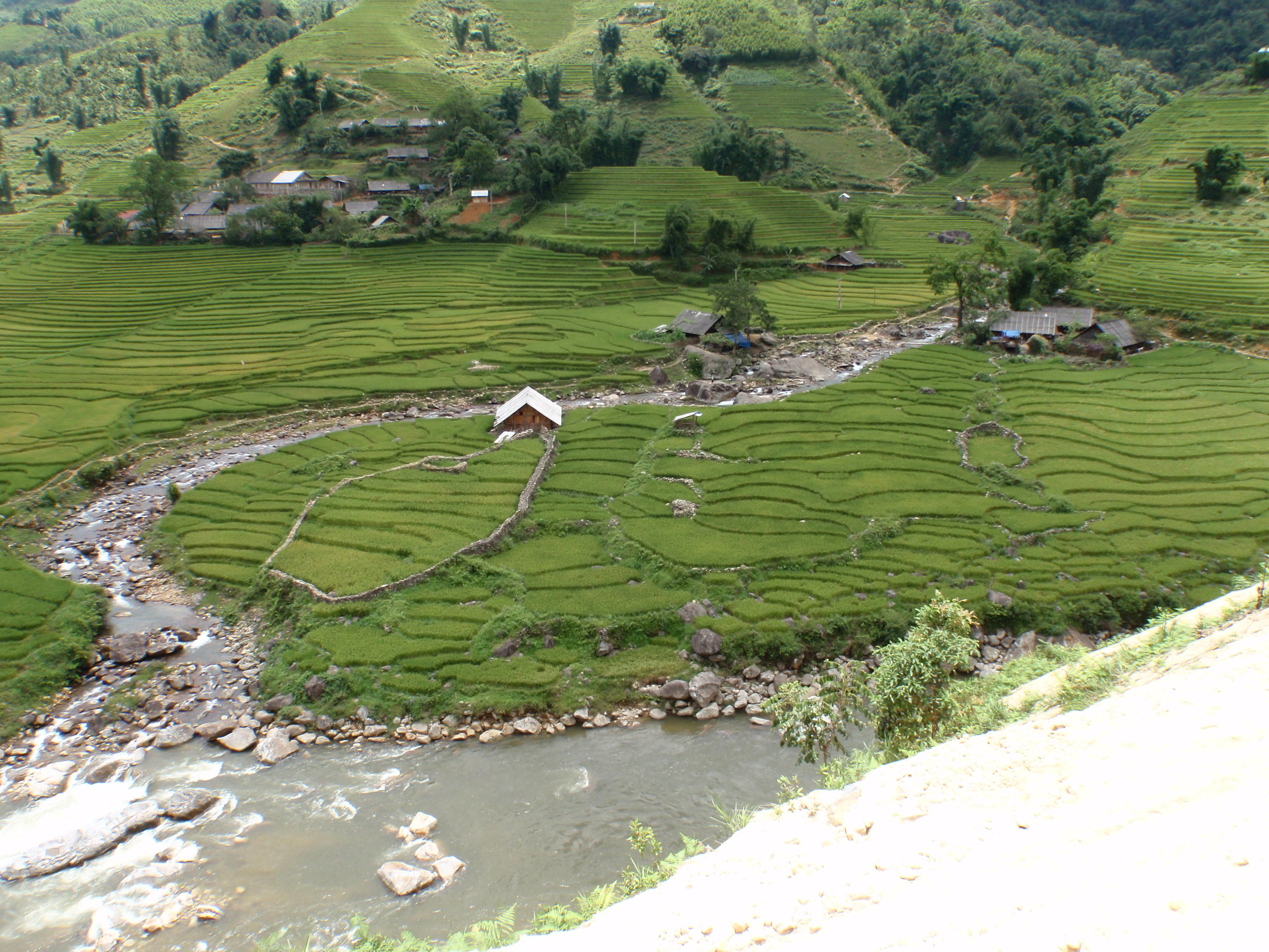 Sa Pa Rice fields