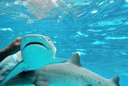 Naqalia Shark Snorkelling