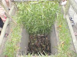 Man traps, set by the Vietnamese
