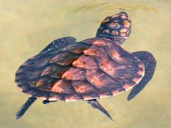 Baby turtle sanctuary
