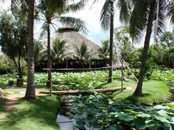 Lillie pond in Ho Chi Minh