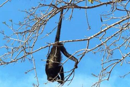 ATV + Monkey Sanctuary