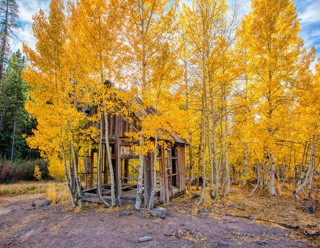 Autumn Shack