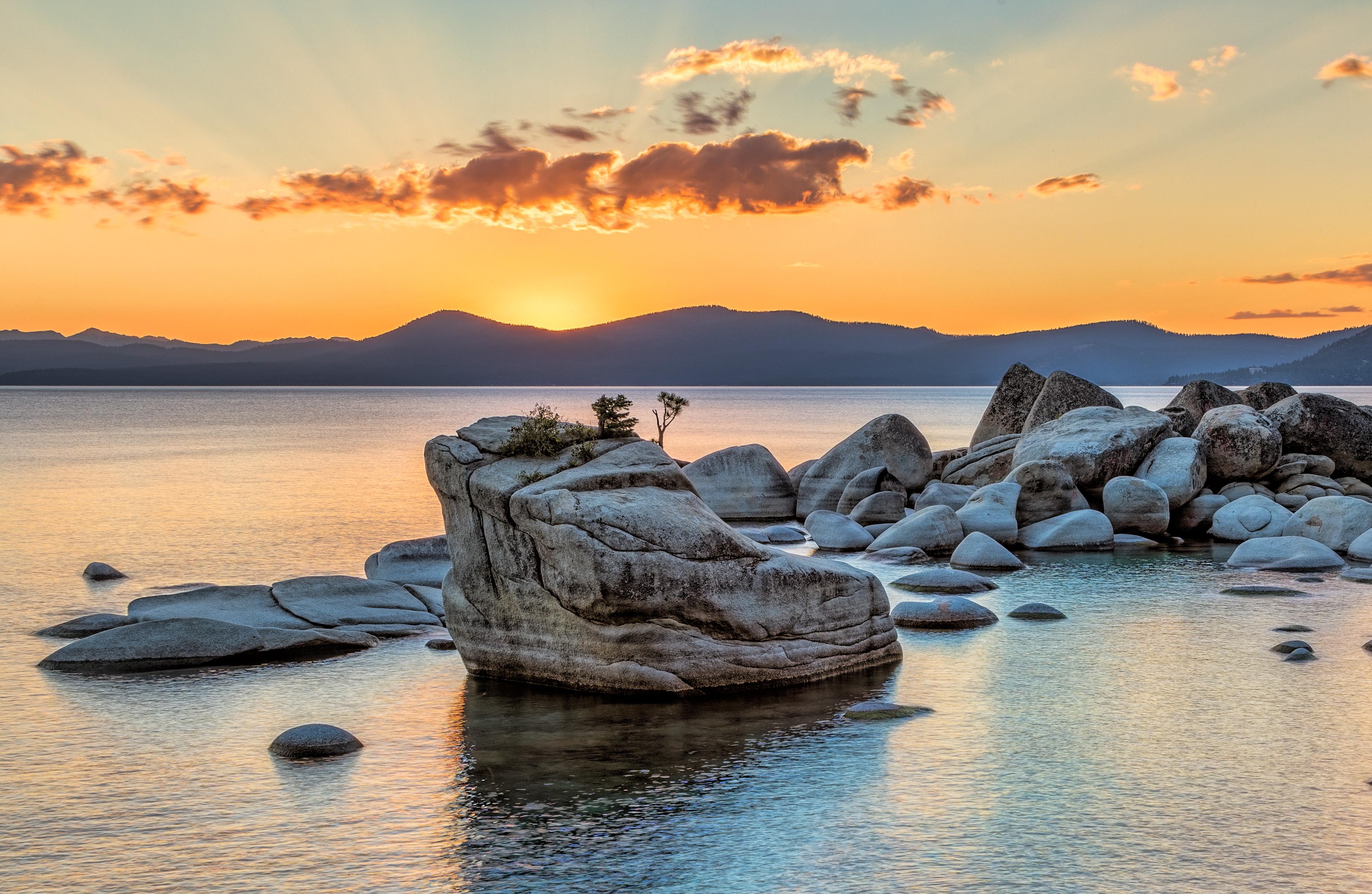 Bonzai Sunset